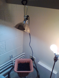 A Pic of one of the clamp lamps
